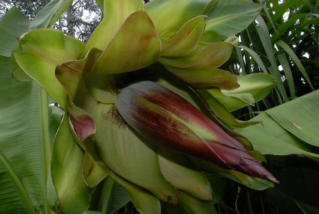 Image Result For How To Start A Tropical Garden