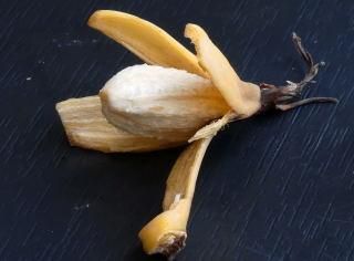 A peeled Abyssinian banana.