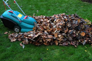 Mow the leaves