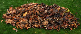 Leaves piled up on a lawn