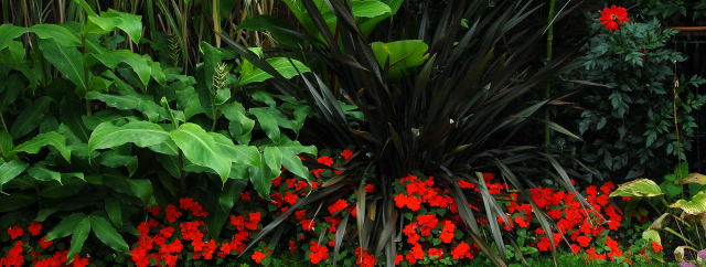 Red impatiens moulding seamlessly to other foliage.