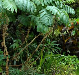 The stalk effect of Melianthus major