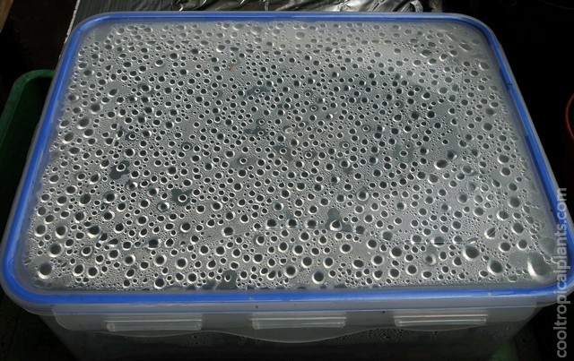 Condensation formed on the inside of the container lid.