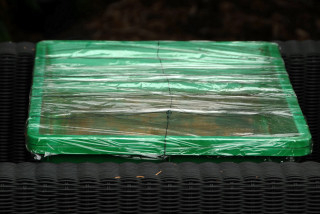 Heated propagator with cling film cover.