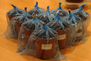 Labelled pots sealed in clear plastic bags awaiting germination