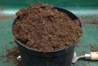 Cover the pot with compost