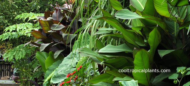 tropical garden design a mixed tropical border