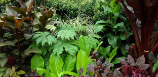 Contrasting tropical foliage