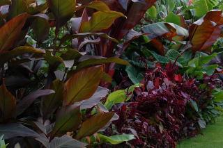 Colourful tropical foliage