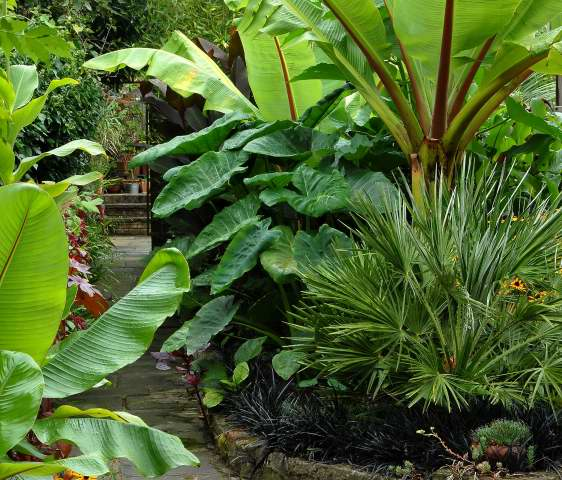 Tropical garden picture for Backyard plant design ideas