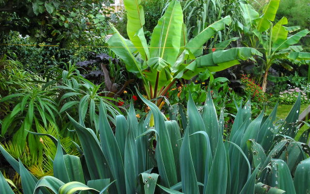 Lush tropical lanscape created using exotic garden plants