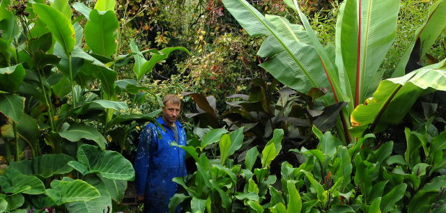 The Author amongst tall tropical foliage
