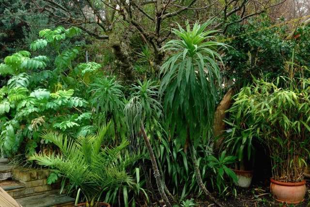Winter interest in the cool tropical garden
