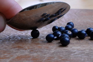 Peeling Ophiopogon planiscapus 'Nigrescens' seeds with a teaspoon.