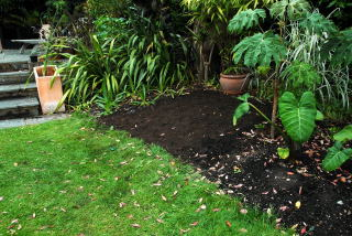 The bog garden ready for planting.