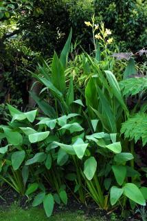 Plants enjoying the wet soil of the bog garden.