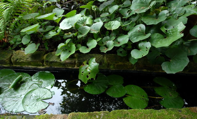 Garden pond surounded by lush vegetation.