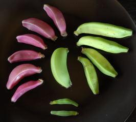 An assortment of ornamental bananas