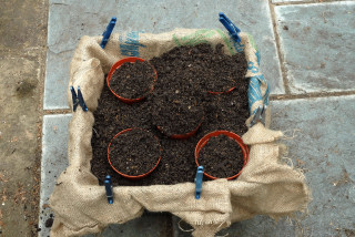 Pond basket half filled with potting mix