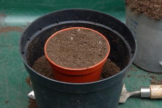 A flower pot inside a bigger flower pot