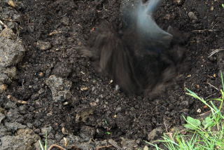 The compost is mixed with the sub soil