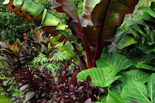 Red and green tropical foliage