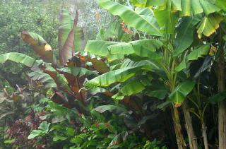 A tropical border