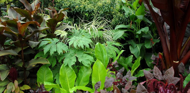 Picture of contrasting tropical foliage
