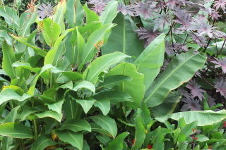 A nice mixture of large tropical foliage plants