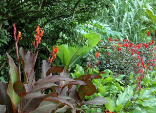 a colourful tropical border - Garden Design Tropical