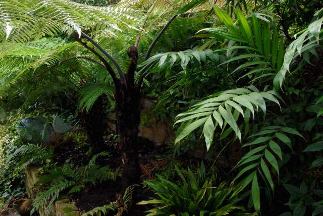 Tree ferns provide winter interest in the shade.